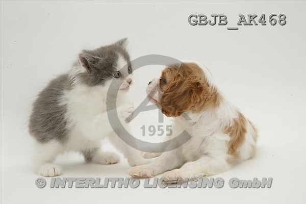 Kim, ANIMALS, fondless, photos(GBJBAK468,#A#) Tiere ohne Fond, animales sind fondo