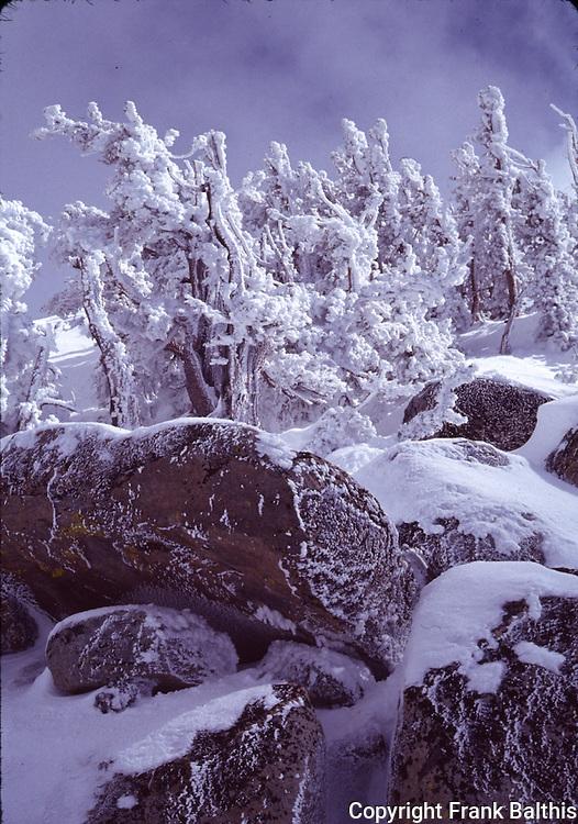 Frost near summit of Heavenly Valley Ski Area