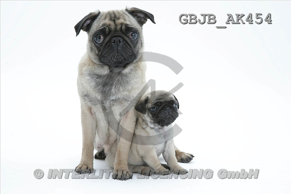 Kim, ANIMALS, fondless, photos(GBJBAK454,#A#) Tiere ohne Fond, animales sind fondo