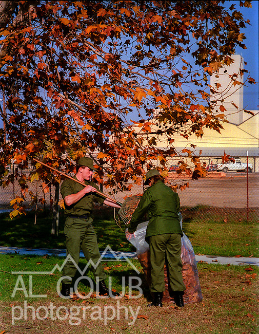 Airmen raking leaves by the baracks.<br /> Castle Air Force Base-October 28, 1988.  I photographed  basic scene setter images to go with base closure stories.  Photo by Al Golub<br /> <br /> Castle is named for Brigadier General Frederick W. Castle, who died on Dec. 24, 1944 flying his 30th bombing mission. He died leading an armada of 2000 B-17s on a strike against German airfields. On the way to the target, an engine failure over Liege, Belgium caused his bomber to fall behind, where it was attacked by Germans and caught fire. He ordered his men to bail out but stayed alone at the controls of the flaming Flying Fortress until it crashed. The entire crew, except Gen. Castle and one airman killed before the bailout order, survived. Gen. Castle received a Medal of Honor posthumously for his bravery.<br /> <br /> Castle became home to the 93rd Bombardment Wing in 1947. Aircraft stationed at Castle included B-29, B-17 and C-54 aircraft, with B-50 bombers arriving in 1949. In 1954, B-47 bombers arrived.  On June 29, 1955, Castle received the Air Force's first B-52. These heavy bombers can hold the equivalent of three railroad cars' worth of fuel. The first Air Force KC-135 jet tanker arrived May 18, 1957<br /> <br /> Castle was selected for closure under the Defense Base Closure and Realignment Act of 1990 during Round II Base Closure Commission deliberations (BRAC 91). The last of the B-52s left the base in 1994, followed by the departure of the last of the KC-135s in early 1995. The base closed September 30, 1995.
