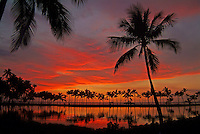 Palm trees, water reflections, brilliant sunset at Anaehoomalu fishpond on the Big Island of Hawaii.