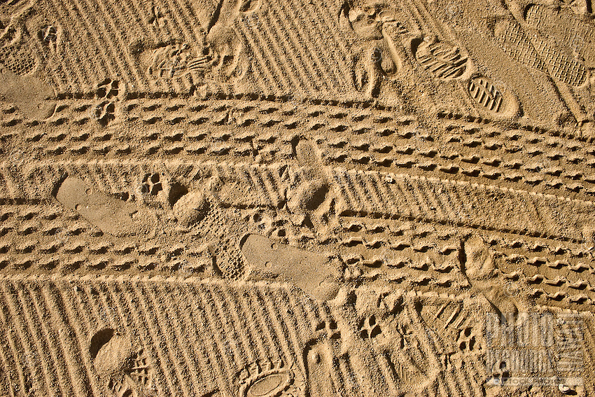 Diverse tracks and prints on sand conveying the concept of a diary kept by the beach.