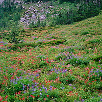 ORCAN_013 - USA, Oregon, Mount Hood National Forest, Mount Hood Wilderness, Paintbrush and lupine bloom in subalpine meadow alongside small conifers.