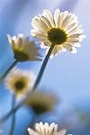 Gardens - Flowers