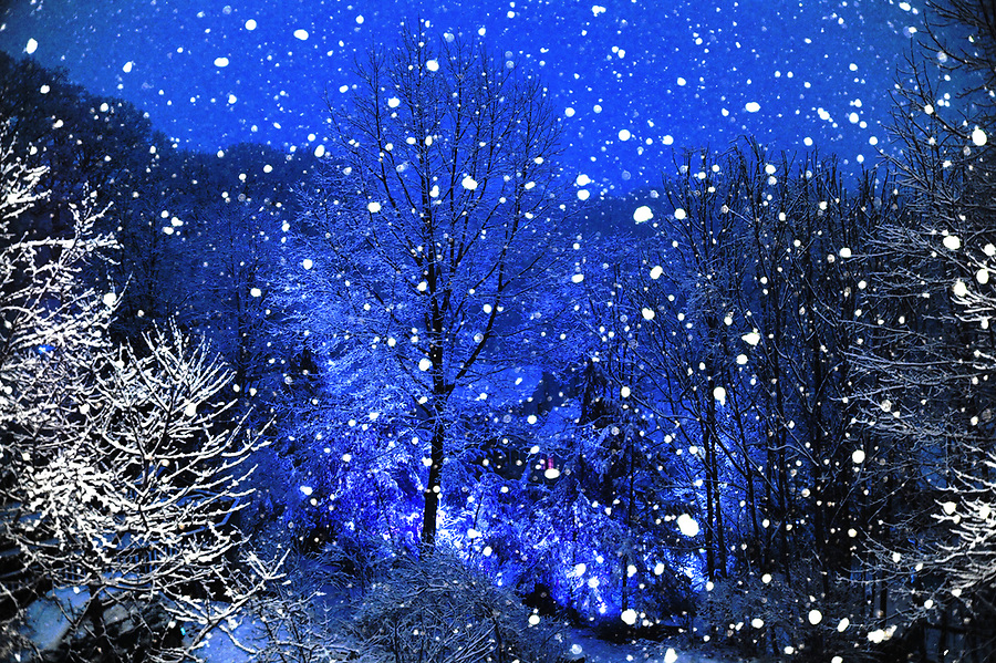 Spring snow April 2, 2018 about 3 a.m. This is false color added. Actually, the real color was just as unusual because of street lights bouncing off the clouds the true color was amber which made it appear that the landscape was burning. Lights in my neighbor's yard under the central tree added dimension and detail on the snow covered branches. Strobe on camera, of course, caught the snow flakes close to the camera as well as the branches on the sides of the frame making them appear white.