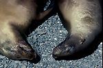 Sealions sleeping, portraits, humour, Galapagos Islands