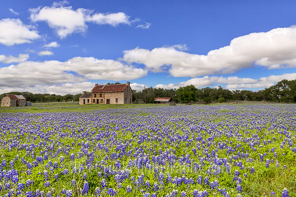 Another great shot from different perspective of the bluebonnet field at the old farm house in the Texas hill country. Many come here to capture this image because it is right off the highway and most years they have some blueblonnets but this year is one of the better years so we had to take just one more round. We don't know how much longer it will be here since the land is up for sale so we captured extra images this year because you never know how much longer it will be around.