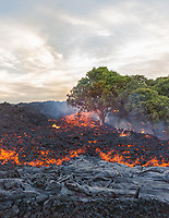 Creation/Destruction: A'a lava flows slowly over the land, Kalapana, Hawai'i Island. Lava flows downhill, with extreme heat and destruction of trees and everything in its path, while simultaneously creating brand new land.