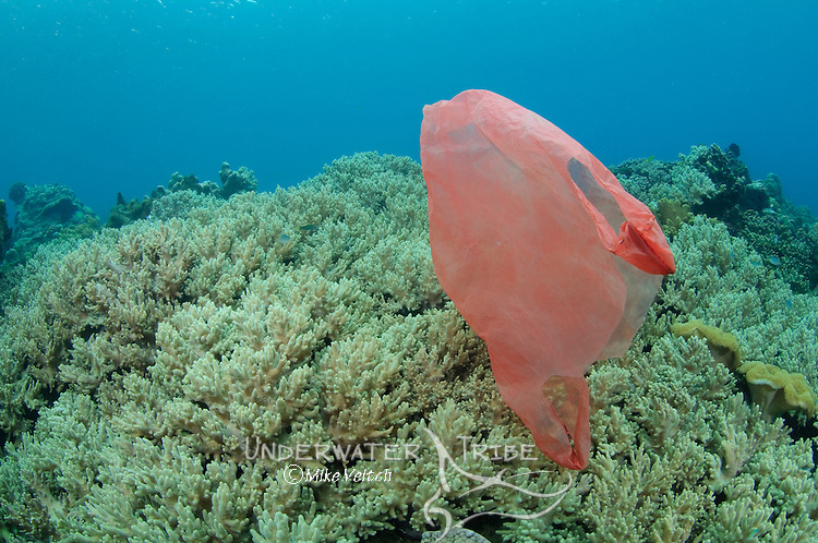 Discarded plastic bags are a big problem in many areas of Indonesia