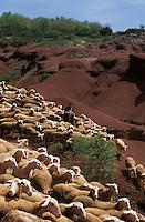 Europe/France/Midi-Pyrénées/12/Aveyron/Larzac/Env de Camares: Joseph Teroustan berger de la ferme de Campalvies dans le rougier de Saint Afrique avec son troupeau de brebis - Fromage de Roquefort