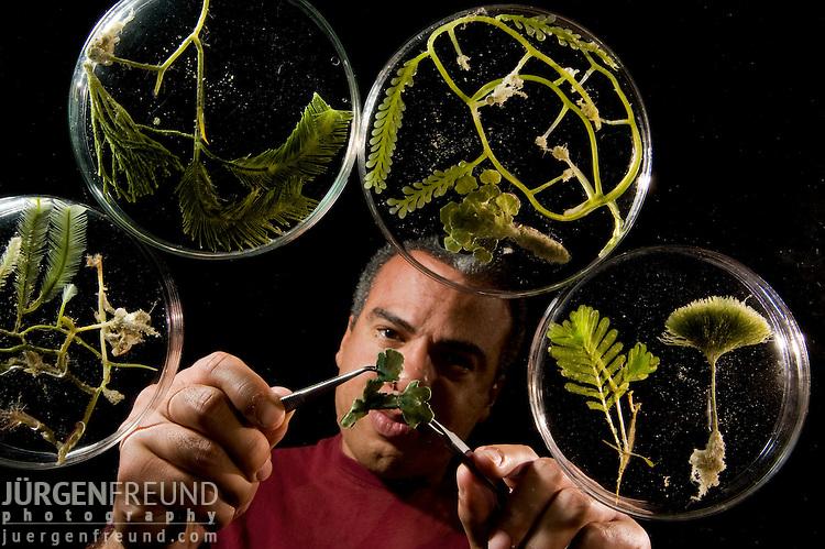 Fred Gurgel organizing his algae specimens,