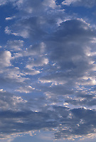 Altocumulus Clouds in the Evening