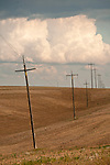Leaning power poles through a plowed wheat field in Washington's Palouse.
