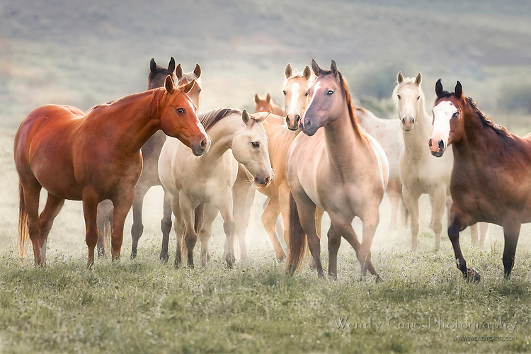 Herd of horses standing and posing as if they were in a dance class