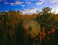 Orb Weaver web  Everglades National Park Florida  Sunrise  January