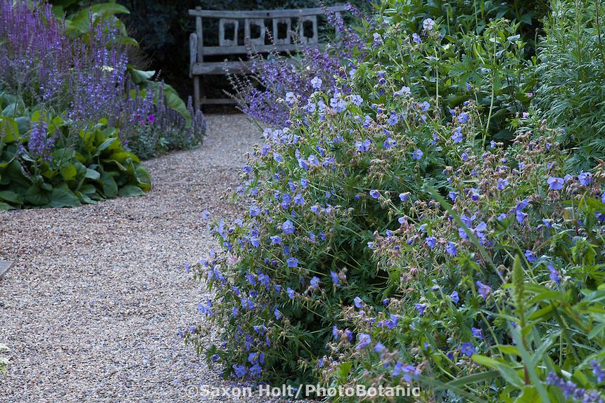 Blue flowering geranium in perennial border by gravel path; Gary Ratway garden