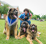 Wantagh, New York, USA. 4th July 2015. ADAM EZEGELIAN, American Idol Season 14 finalist and Wantagh resident, poses with three Leonberger breed dogs, the NYC Boys, L-R, Mr. America, Hollywood, and Magneto, after Ezegelian sang at start of The Miss Wantagh Pageant ceremony after the Wantagh July 4th Parade, a long-time Independence Day tradition on Long Island. The large brown and black actor dogs, owned by Morgan Avila, are in the movie The Equalizer, Off-Broadway plays, Westminster Dog Show, and are Therapy Dogs.