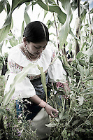 A members of The Pakarinka Sisari Ancestral Wisdom Center near Otavalo, Ecuador, harvests fava beans.