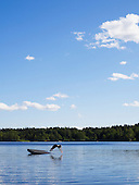 Woman is doing a perfekt jump into a absolue clam lake in summer, the water is cold but very blue.