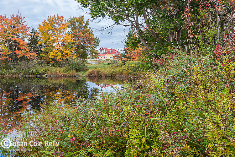 Fall foliage on Thomas Bay, Bar Harbor, ME, USA