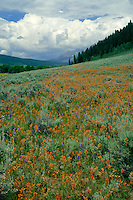 Paintbrush and Anthracite Range<br />