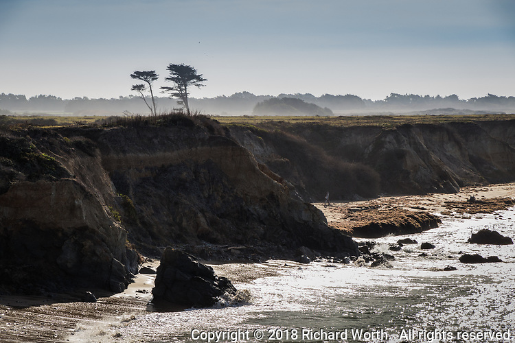 With the horizon shrouded in fog, a small stand of coastal pine towers over the surrounding coastal terrace prarie -  holding forth on the rocky shoreline at Año Nuevo State Reserve on New Year's Day, 2018.