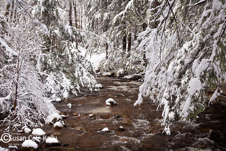 Willard Brook State Forest in Townsend, MA, USA