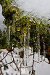 Ice on moss