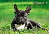 Marek, ANIMALS, REALISTISCHE TIERE, ANIMALES REALISTICOS, dogs, photos+++++,PLMP3267,#a#, EVERYDAY