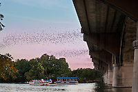 Millions of Mexican Freetail Bats take flight from the Congress Bridge for their evening feeding as bat watchers take delight