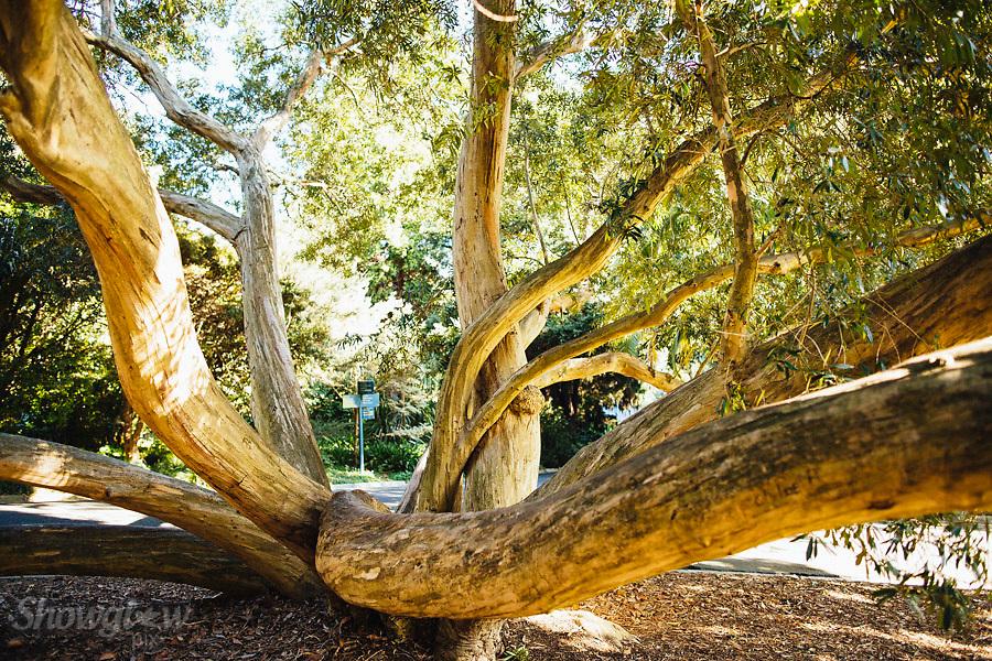 Image Ref: M277<br /> Location: Royal Botanical Gardens, Melbourne<br /> Date: 03.06.17