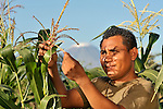 Natividad Rios inspects the corn in a community farm in El Bonete, a small village in northwestern Nicaragua.