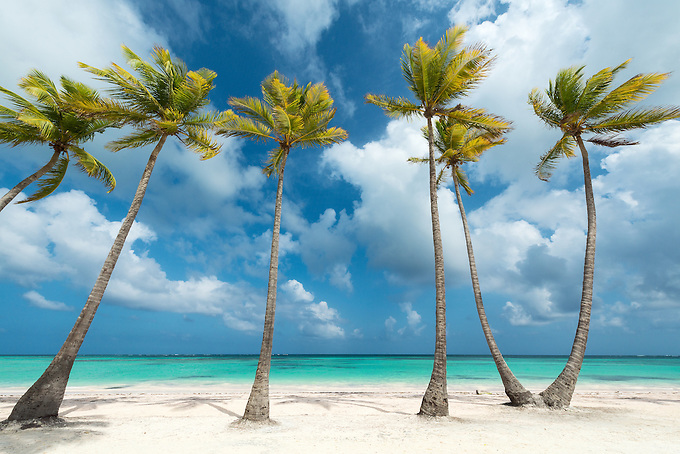 A row of palms line a picturesque beach and aquamarine water, Dominican Republic.<br />