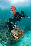 Craig Humphrey and Katharina Fabricius collecting porites coral head