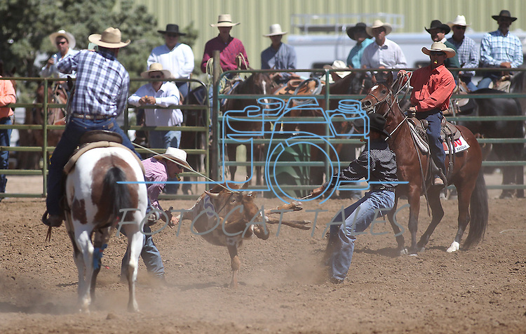 The Lee Stock Horses team competes in the ranch doctoring event at the Minden Ranch Rodeo on Sunday, July 24, 2011, in Gardnerville, Nev. .Photo by Cathleen Allison