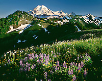 Evening light on a field of wildflowers below Mt. Baker; Mt. Baker/Snoqualmie National Forest, WA