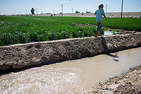 MEXICALI, MEXICO - March 13. Rafael works as a sprinkler in a field, must connect pipes from the water channel to the crop to ensure irrigation and maintain production on March, 13 2019 in Mexicali, Mexico.<br /> The rivers usually end in the sea, the Colorado dies in a border. Its the only case like this in the world. There is less water in the Colorado River, hence less water in crops and areas of northern Mexico.  <br /> (Photo by Luis Boza/VIEWpress)