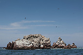 Birds at the Islas Ballestas, Paracas, Peru