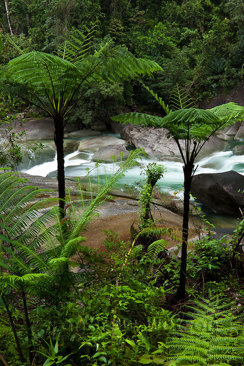 View through ferns to Devil's Pool at Babinda Boulders.  Babinda, Queensland, Australia