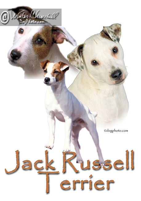 Jack Russell Terrier This design is offered on gift merchandise ONLY.<br /> <br /> You'll find all the merchandise options listed IN THE CART so add a design to your shopping cart first. All merchandise item are shipped straight to you from our lab in Dallas, Tx.