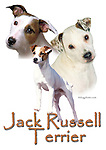 Jack Russell Terrier This design is offered on gift merchandise ONLY.<br />