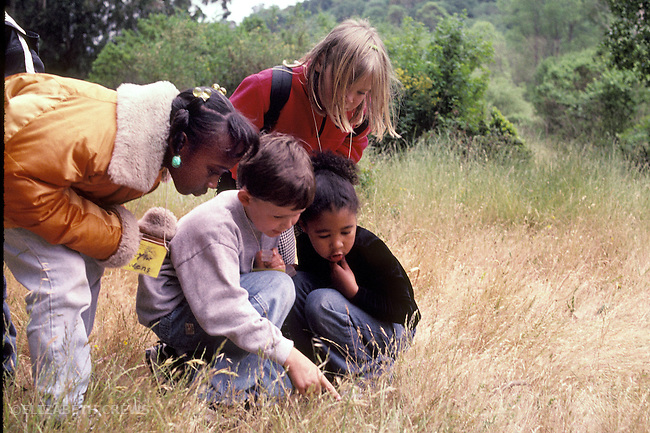 Berkeley CA 1st graders examining bug specimens on nature field trip to local regional park