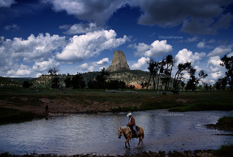 Cowboy drives cattle under Devil's Tower an ancient volcano plug  or monolithic igneous intrusion that is more than 1200 feet high. It was featured in the Hollywood movie Closer Encounters of the Third Kind in 1977.