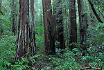 Alrmstrong Redwoods