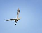 Herons*