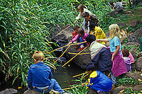 EDITORIAL ONLY.  Kids with bamboo fishing poles explore a mountain stream in Makiki Valley. Nature Center hike