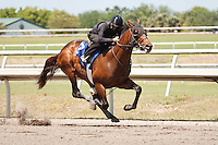 #72Fasig-Tipton Florida Sale,Under Tack Show. Palm Meadows Florida 03-23-2012 Arron Haggart/Eclipse Sportswire.
