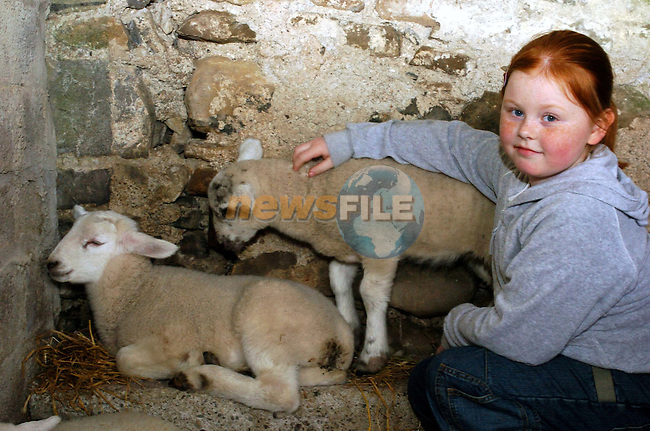 Amy Kelly with the lambs at the easter egg hunt in New Grange Farm.Picture Fran Caffrey Newsfile