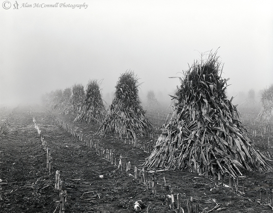 &quot;Amish Harvest&quot;<br />