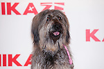 """Rua the Dog attend the photocell of the movie """"KAMIKAZE"""" in Madrid, Spain. March 27, 2014. (ALTERPHOTOS/Carlos Dafonte)"""